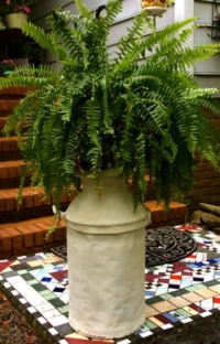 Vintage Milk Cans with Fern