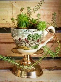 Vintage Teacup with Sedums