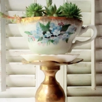 Vintage Teacup with Succulent on Pillar Stand