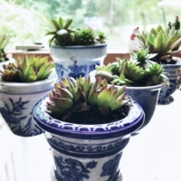 Petite Blue and White Planters
